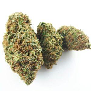 Chi Haze Cannabis Strain