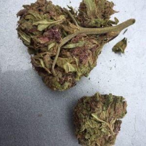 Violeta gorilla