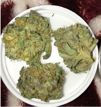 Thin Mint Girl Scout Cookies Strain